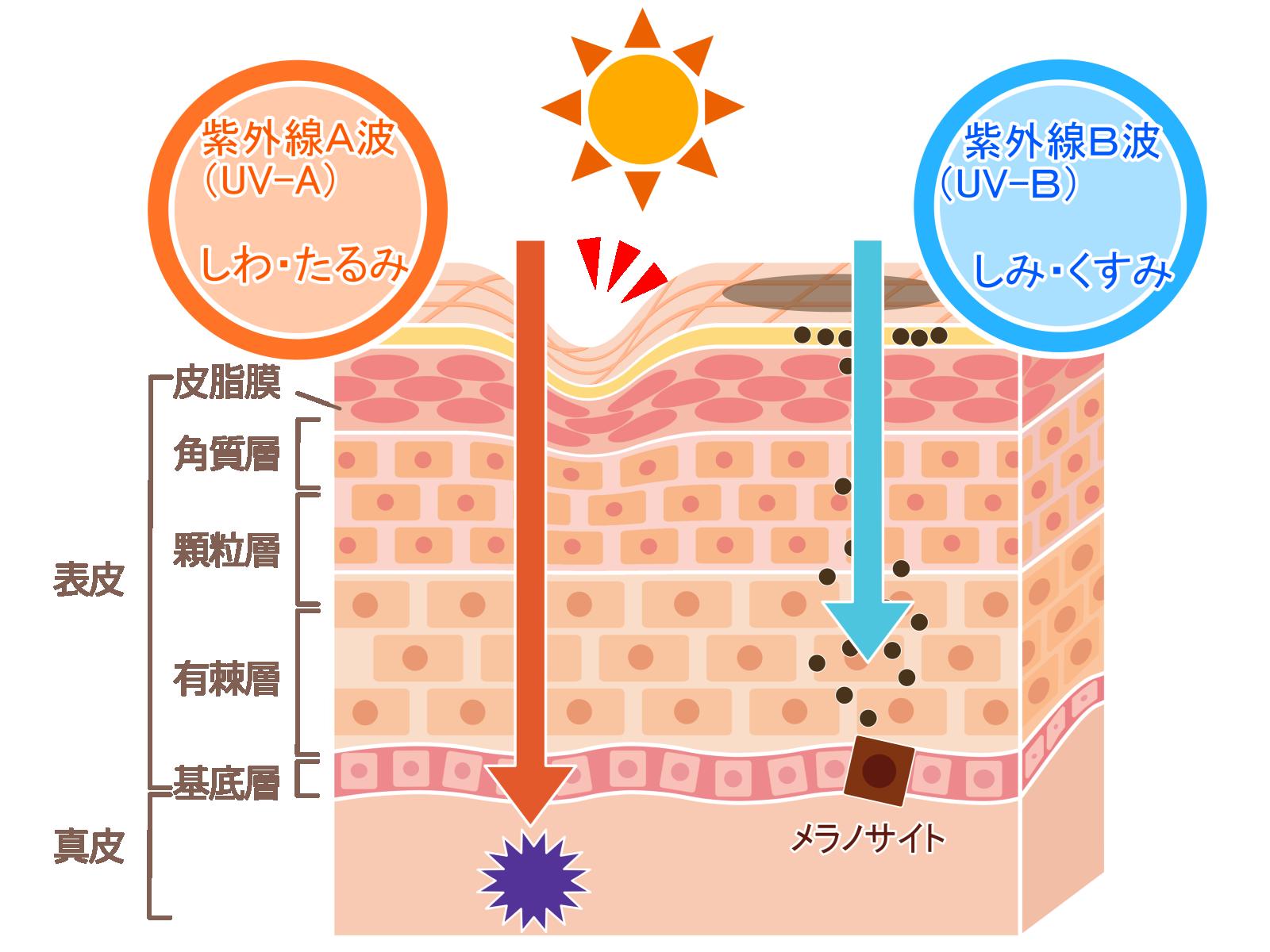 紫外線と抜け毛や薄毛の関係