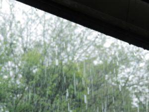 雨に濡れるとハゲる?