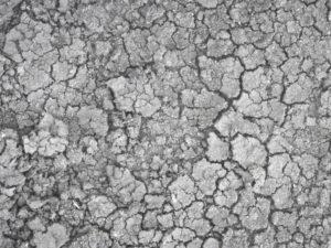 塩素による頭皮の乾燥は薄毛の原因