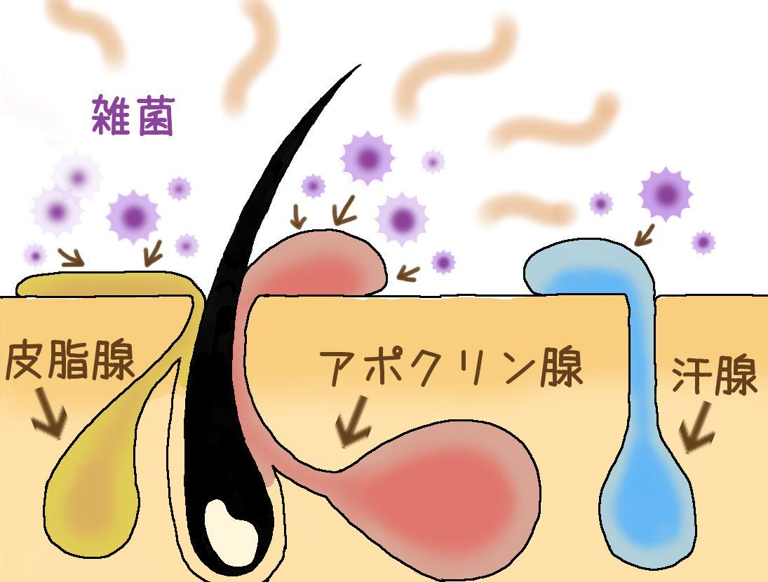 肥満と抜け毛・薄毛の関係は?デブ(メタボ)とハゲの関係を徹底調査!